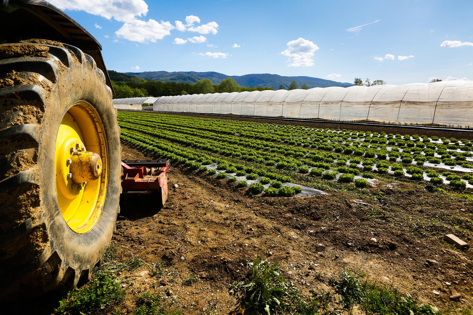 PIEMONTE: BANDO DA 2 MLN EURO PER MIGLIORARE AZIENDE AGRICOLE
