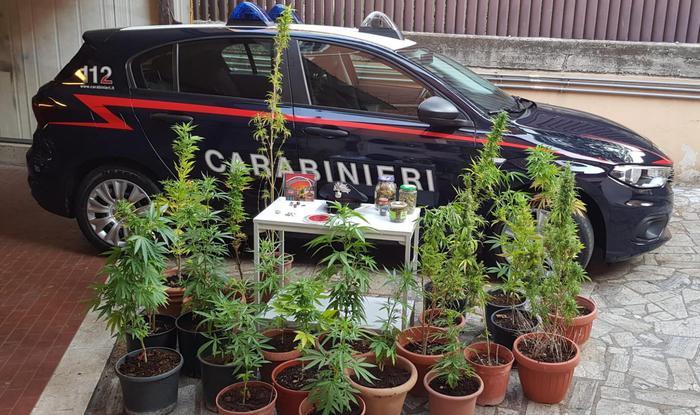 BEINASCO: PRODUCEVA DROGA IN CASA, ARRESTATO